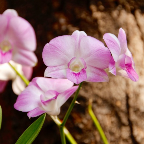 orchid-1124591_1920